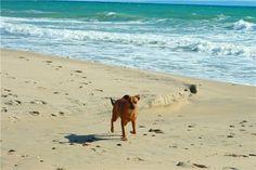 Chica en Zahara de los Atunes (Barbate, Cádiz) - Paseando con mi perra por las playas de Zahara, todo disfrute de aire, mar y sal