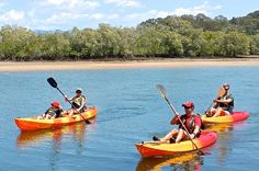 Burleigh Head National Park to David Fleay Wildlife Park Kayaking Tour from the Gold Coast Experience three Gold Coast adventures in one incredible tour. Walk through the subtropical rainforest and view the incredible Queensland coastline views. Visit Tallebudgera Creek and take a guided kayaking experience exploring the mangrove banks and waterways towards David Fleay Wildlife Park to see some of Australia's iconic wildlife including crocodiles and koalas. After meeti...