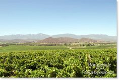Win a weekend for 2 in Bonnievale 2 In, Wines, Cape, To Go, Outdoor, Beautiful, Mantle, Outdoors, Cabo