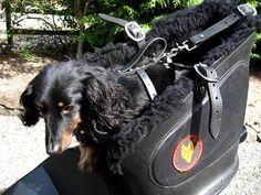 Google Image Result for http://www.examiner.com/images/blog/wysiwyg/image/joe-straps.jpg