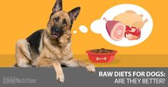 Richard Patton (PhD) answers one of the biggest questions owners are asking when it comes to their dog's diet ... why feed raw?