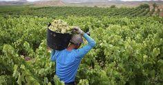 España, al frente de las exportaciones mundiales de vino en 2015