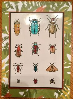 Beetles & Bugs by mycatbillybob - Cards and Paper Crafts at Splitcoaststampers