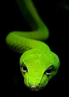 Green | Grün | Verde | Grøn | Groen | 緑 | Emerald | Colour | Texture | Style | Form | Pattern |  Green snake by Unknown
