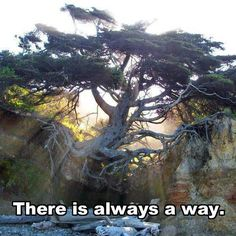Funny pictures about Old tree. Oh, and cool pics about Old tree. Also, Old tree photos. Design Visual, Bonsai, Stephen Covey, All Nature, Nature Pics, Running Away, Tree Of Life, Beautiful World, Beautiful Places