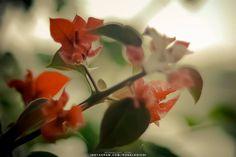 (c) 2010 - NATURE  NIKON D70 - Nikkor 18-70mm ______ #nature #naturephotography #natureza #natureshots #photography #photographer #park #parque #jardim #garden #fotografia #fotografo #ronaldoichi #摄影 #色彩 #カメラマン #フォトグラフィー #写真 #自然 #植物 #摄影 #色彩 #カメラマン #フォトグラフィー #写真 #自然 #植物 #花 #flower #flowers