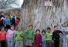Kütahya Orman Bölge Müdürü Kenan Eryiğit, Türkiye'nin bilinen en yaşlı kavak ağacının, Domaniç ilçesindeki 300 yıllık ağaç olduğunu bildirdi.…