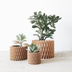 Minimalist and Geometric Wood Planter for succulents or cacti / Modern Design / Hygge / CROIX DE BOIS perfect for cactus and succulent Indoor Plant Pots, Indoor Planters, Diy Planters, Potted Plants, Planter Pots, Cactus Plants, Wooden Planters, Large Planters, Succulent Planter Diy