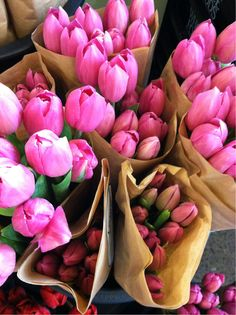 Pink tulips look gorgeous both pre and post bloom!