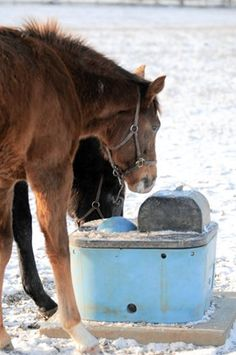 Water: The Most Important Nutrient for Horses