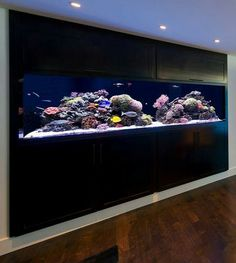 Great aquarium fish tank