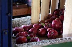 Apple polishing at Nature's Select Orchard