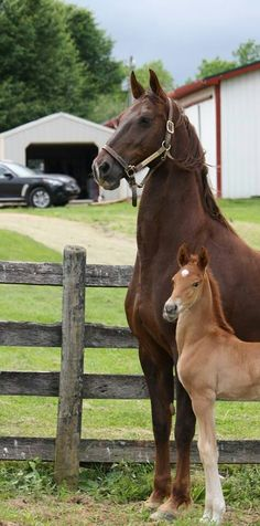 Beautiful horses. It's cute the mom's standing tall and the foal's trying the same!