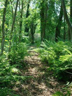 Het landschap waarin het huis staat bestaat uit open plassen met daarin legakkers die ontstaan zijn uit het vroegere gebruik van het landschap, namelijk het turfsteken. In de loop van de eeuwen is daarop een eigen vegetatie ontstaan en bij het ontwerp en specifiek het beplantingsplan van de tuin is er goed gekeken naar de oorspronkelijke vegetatie die van origine groeit op de daar aanwezige veengrond.