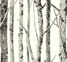once upon a time birch trees wallpaper forest / cool wallpapers / cool patterns / backgrounds / #ouat