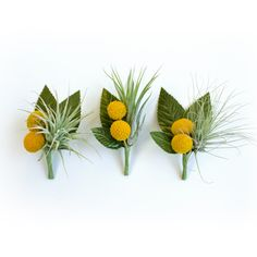 Air Plant & Billy Button Boutonnieres, Set of 3 by Eucca Floral Studio | EUCCA Floral Studio