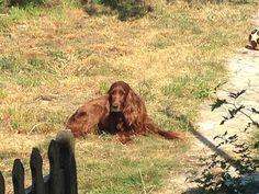 Rosie enjoying the sun