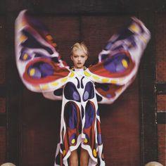 gemma butterfly web