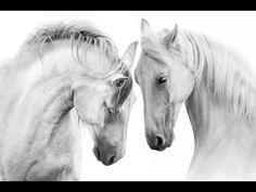 White horses with long mane. Couple of white horse on white background , Horse Couple, Horse Wall Art, Acrylic Painting Tutorials, Horse Print, White Horses, Stretched Canvas Prints, Wall Art Prints, Creations, Etsy