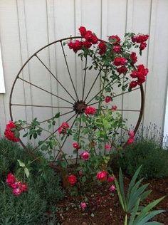 Wagon Wheel as Trellis by alyssa