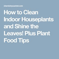 How to Clean Indoor Houseplants and Shine the Leaves! Plus Plant Food Tips