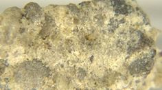 Conglomerate Isolated Rock. http://www.pond5.com/stock-footage/45598218?ref=StockFilm keywords:conglomerate,Gonaives,Haiti,texture,shine,sides,white,separately,facet,shading,collection,minerals,background,calcite,closeup,concept,crystal,earth,gemstone,geology,image,isolated,loadstone,macro,magnetite,material,metal,metallic,mineral,mineralogy,mining,money,natural,nature,object,quartz,rare,reflection,rock,science,semiprecious,shape,silver,stone,substance,surface