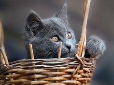 Fertig eingepackt zum mitnehmen — Foto: Shutterstock / ots-photo    www.einfachtierisch.de