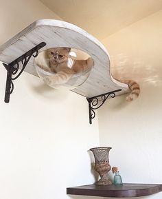 Cat Accessories That You Need - Cat Wall Ideas Cat Hotel, Diy Cat Tree, Cat Playground, Cat Enclosure, Cat Room, Cat Condo, Pet Furniture, Furniture Ideas, Cat Accessories