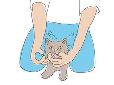 6 Ways to Give a Cat a Pill - wikiHow