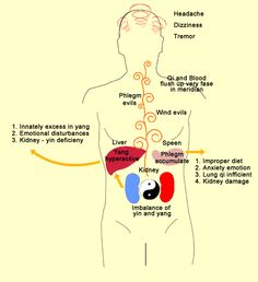 Hypertension development from traditional Chinese medicine perspective.