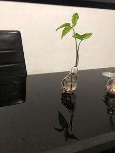 Light Bulb Plant, Planting Bulbs, Vase, Plants, Home Decor, Decoration Home, Room Decor, Plant, Vases