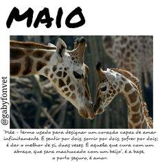Bem vindo Maio!! �� #rcnocrop #pixlr #picsart #cymera #positividade #positive #positivity #goodvibe #pensamento #positivo #mente #maio #mãe #amor #love #photogram #photography #instagood #photographer #carinho #materno #família #family #amormaior #brasil #animals http://tipsrazzi.com/ipost/1504907019865282636/?code=BTigPYTD9hM