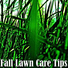 Outdoor and Gardening with Red Hill: Fall Lawn Care