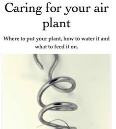 Caring for your air plant by HomePlants on Etsy