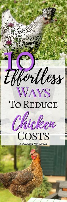 Raising chickens doesn't have to be expensive. Here's a great list of ways to lower your expenses for raising your own chickens! #homesteading #backyardchickens #chickens #raisingchickens #byc #achickandhergarden