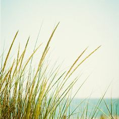 Beach Grass Photography - calming beach prints light green blue cream white aqua seashore neutral coastal wall art fine art - 8x8 Photograph