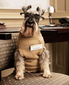"""Schnauzer Shrink: """"I think that you are making more of this than necessary. I am wearing a sweater and glasses. Please have a seat."""""""