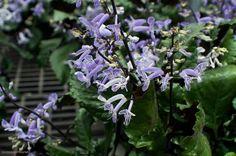 in bloom, facebook.com/LeenstaraileenPhotos Bloom, Facebook, Plants, Photography, Photograph, Fotografie, Photoshoot, Plant, Planets