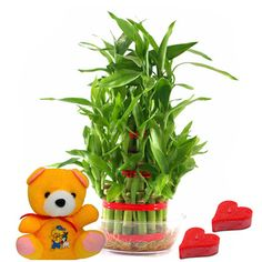 Good Luck Love Affair Feng Shui Lucky Bamboo, Lucky Bamboo Plants, Valentine Gifts For Girlfriend, Boyfriend Gifts, Feng Shui Plants, Raksha Bandhan Gifts, Unique Gifts, Best Gifts, Plant Delivery