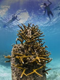 Holy Man - Underwater Sculpture by Jason deCaires Taylor