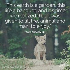 This earth is a garden this life a banquet and it's time we realized that it was given to all life animal and man to enjoy. Tom Brown Jr. #wearewildness #Earth #animal #wildness #wildlife #tombrown #tombrownjr #ShareTheWild #natureseekers #nature