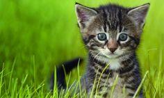 Melhore sua vida com 6 lições de sabedoria felina