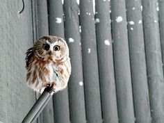 Love him, my new wall paper. #owl