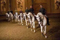Academy of Equestrian Arts in Versailles