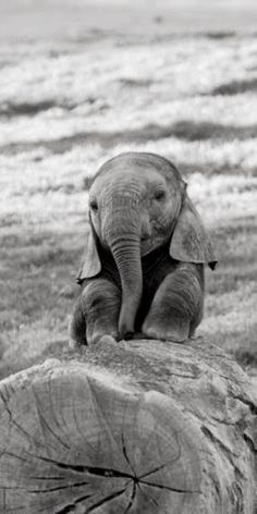 ●•●•●•●•●•● Animals ●•●•●•●•●•● #elephant #animal #cute #aww #color #fashion #photography