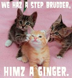 """""""himz a ginger."""""""