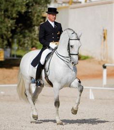 Dressage | Via TheEquus