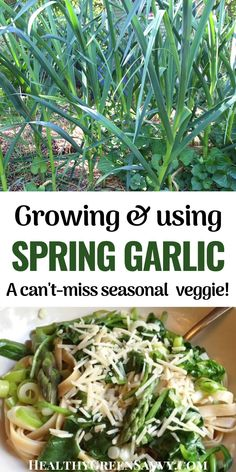 Green garlic is a delicious spring vegetable that deserves to be better known. Here's how to grow and use it, plus a recipe for a mouth-watering fettuccine with spring garlic, asparagus and spinach. #springgarlic #garlic #greengarlic #springrecipes #pastarecipes #garlicrecipes Spring Garlic, Spinach Fettuccine, Green Living Tips, Vegetable Seasoning, Grow Your Own Food, Healthy Fruits, Green Cleaning, Spring Recipes, Chickens Backyard