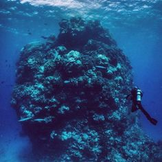 A diver checking out a giant coral bommie in the Great Barrier Reef #Australia. Nothing beats that feeling of being free under the sea. #scuba #scuba_liveaboards #greatbarrierreef by scuba_liveaboards http://ift.tt/1UokkV2