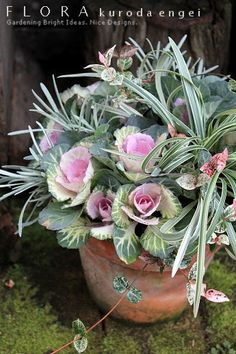 Fall Container Plants, Container Flowers, Container Gardening, Green Flowers, Pretty Flowers, Ornamental Cabbage, Flower Pot Design, Flora Design, Fall Arrangements